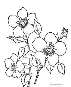 Great Free Images To Use As Digi Stamps And Colour In Flower