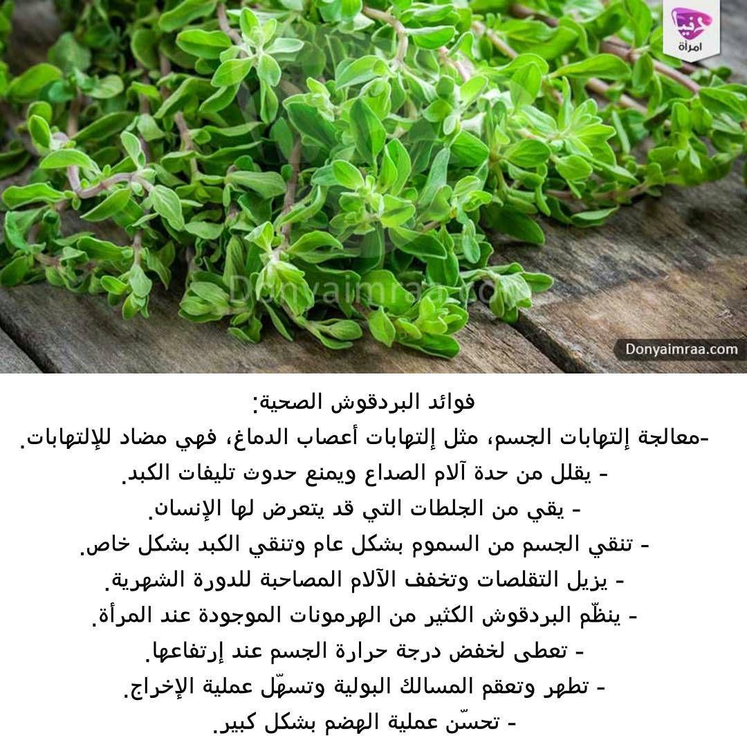 Emraa On Instagram ينصح خبراء الأعشاب النساء بشرب كأس واحد على الأقل يومي ا من منقوع عشبة البردقوش الدافئ وبالتحديد من بلغت منه Herbs Instagram Posts Health