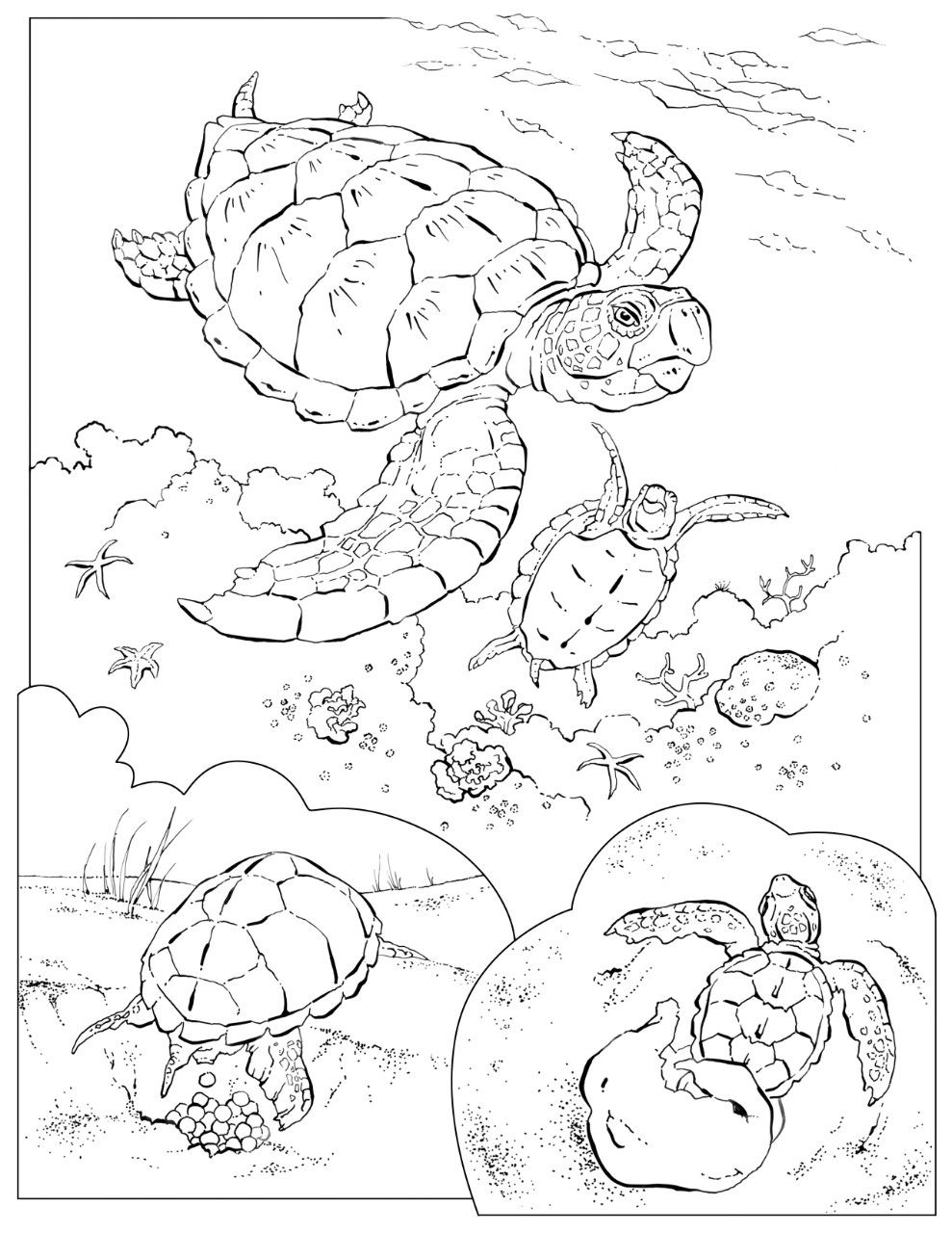 coloring book animals a to i sea turtles turtle and