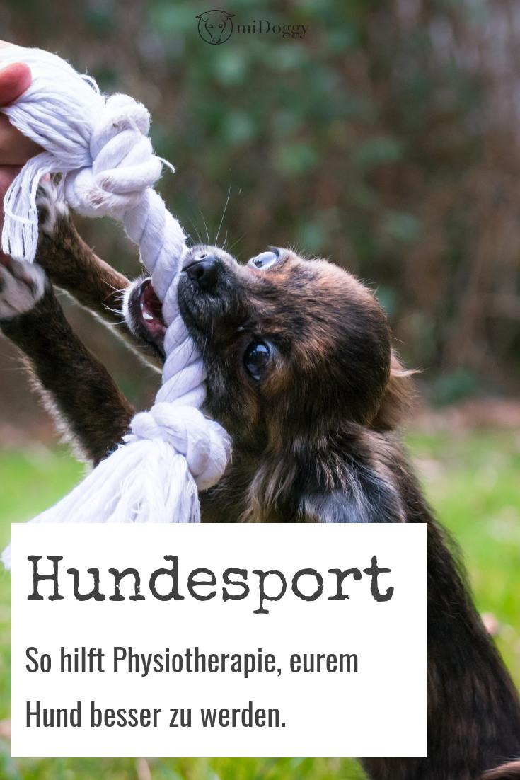 Leistungsoptimierung im Hundesport welche Rolle spielt