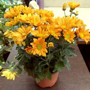 Flowering Plants Online At Nursery Live