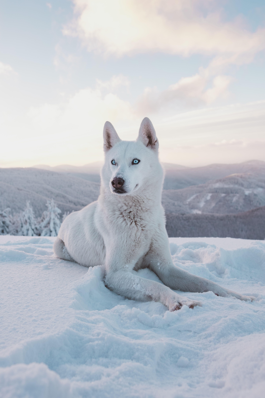 Aesthetic White Dog Names