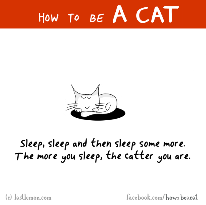 How To Be A Cat For Dummies (23 pics)