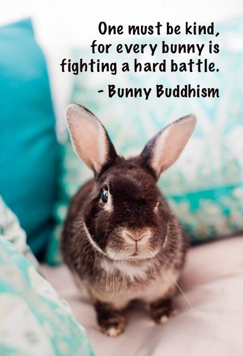 Nestor the bunny, Photo courtesy of Kim C. Click on the pic ...