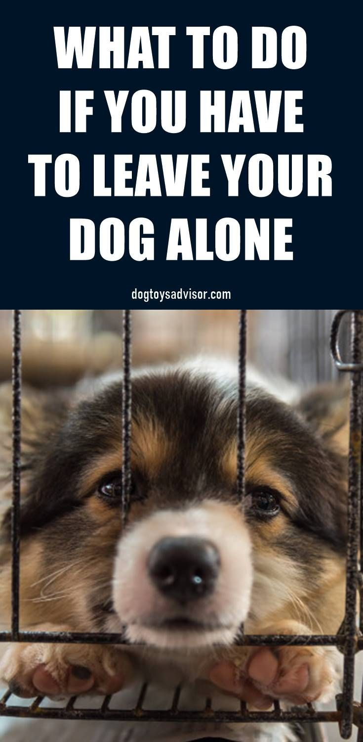 Leaving Your Dog Home Alone Can Be A Difficult Thing To Do And To