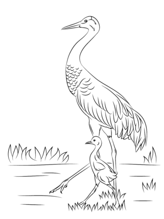 Click To See Printable Version Of Sandhill Crane With Cute Baby
