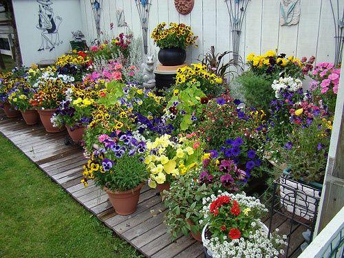 Flower Garden In Pots