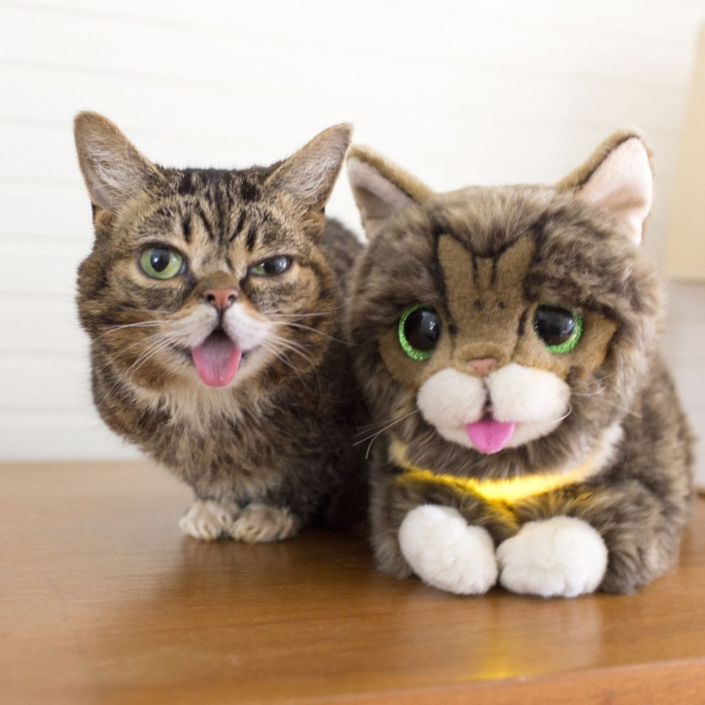 Lil BUB Glow & Purr Plush Toy Cute animals, Cat birthday