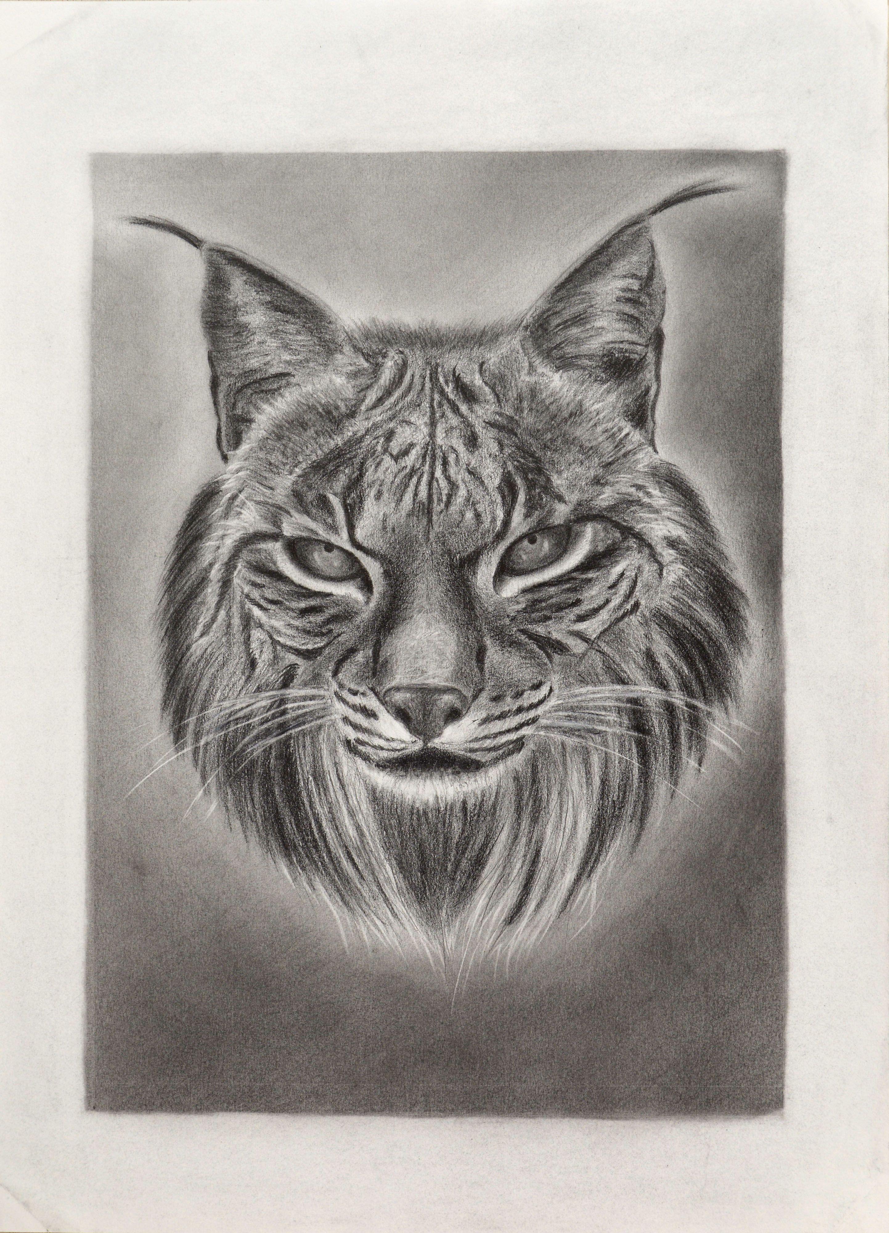 Lince ibérico iberian lynx 06 2015