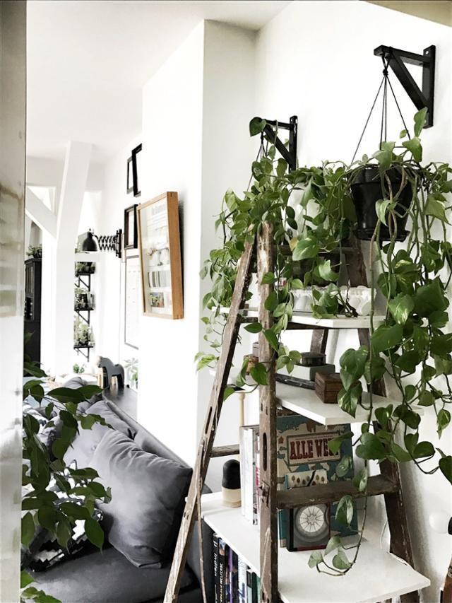 Leiterregal #Pflanzen #bücherregal #wohnzimmer #cou Wohnung - Pflanzen Deko Wohnzimmer