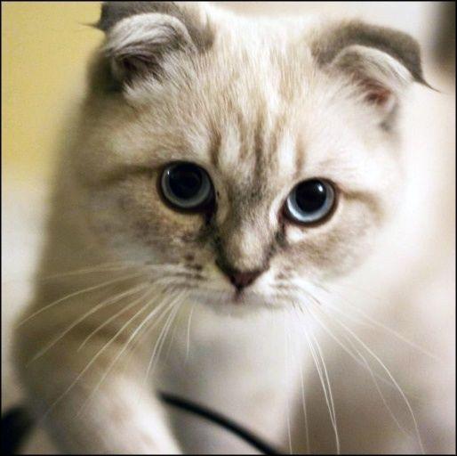 cute very cute :)