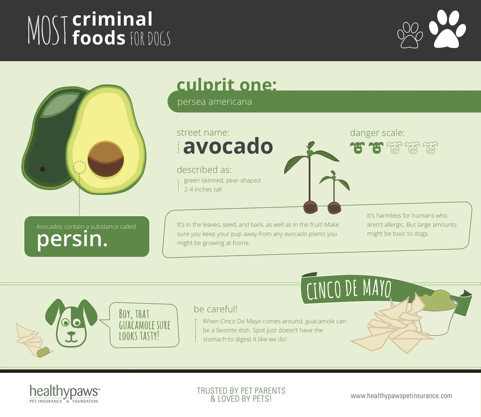 Criminal Foods Dogs Avocado Can dogs eat, Cat safe