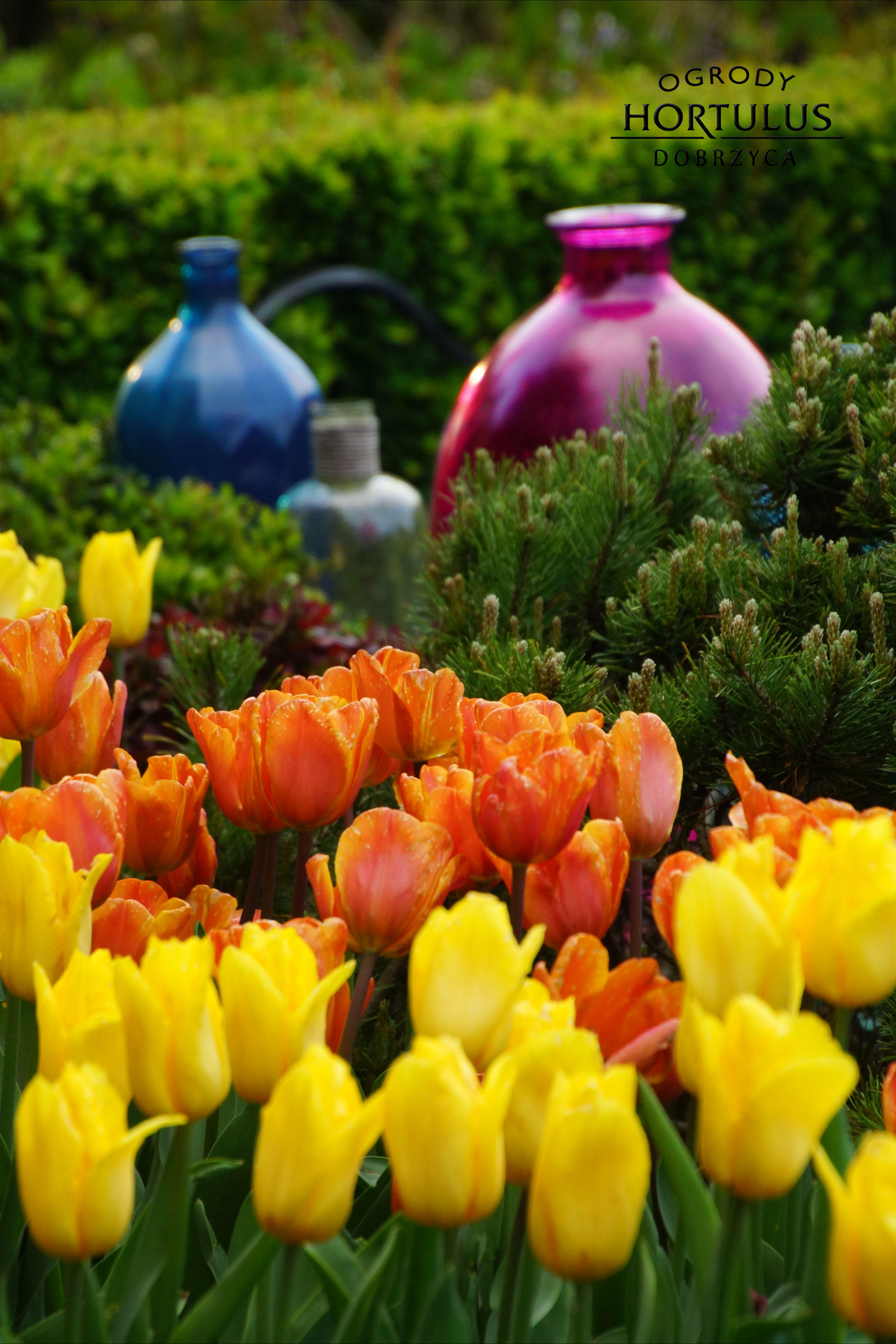 Tulipany W Ogrodzie Kolorowy Piekny Ogrod Sztuk Ogrodowa Elementy W Ogrodzie Ozdoba Ogrodowa Plants Pumpkin Patch Pumpkin