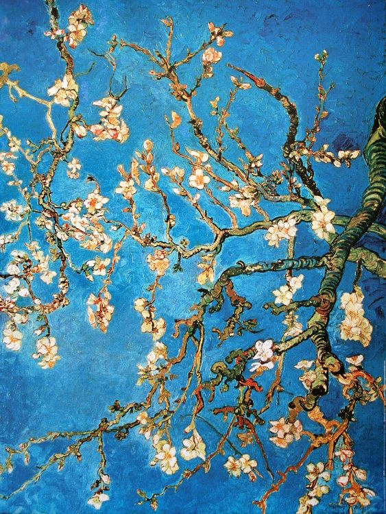 Vincent Van Gogh : Almond Branch in bloom, 1890