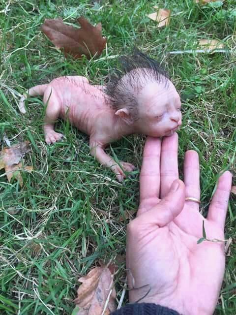 estranha criatura encontrada híbrido de humano e felino e farsas