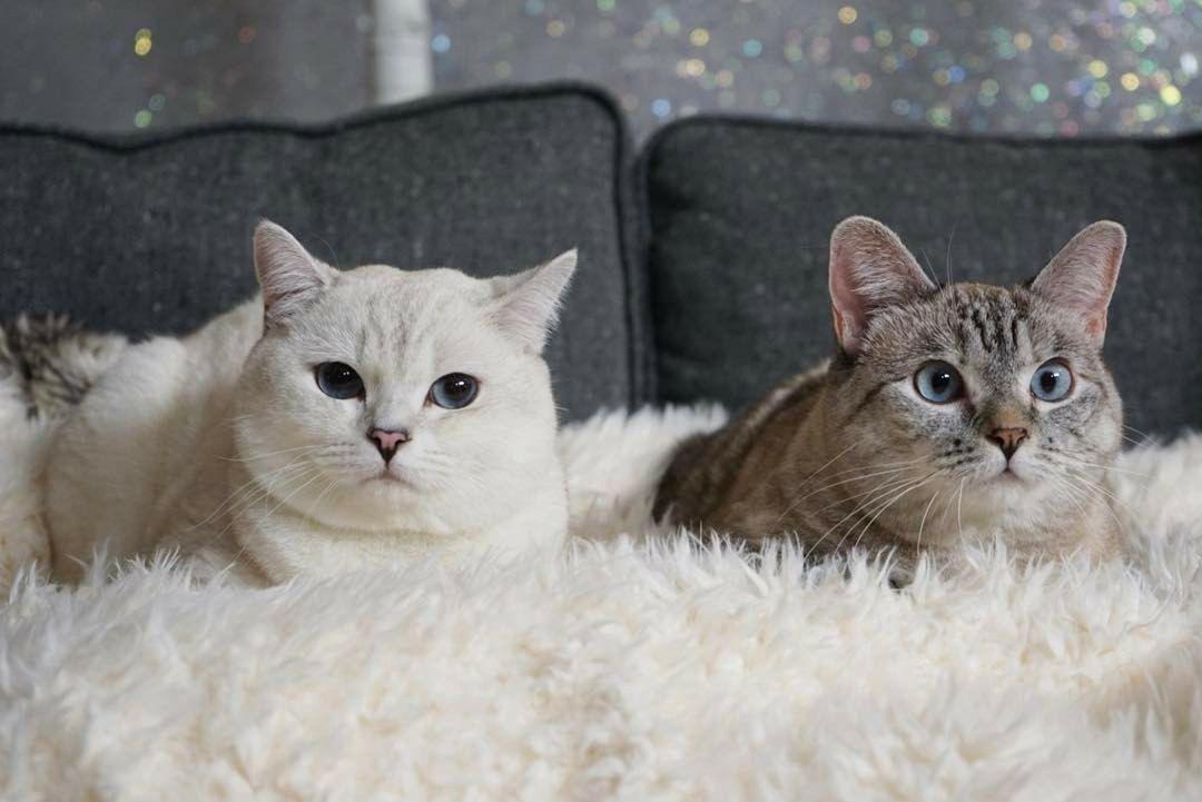 Pin by Tamara Tolliver on Nala and Coffee Beautiful cats