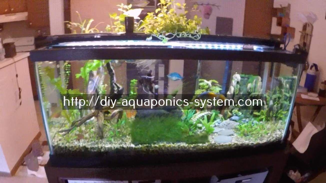 Aquaponics. Aquaponics GreenhouseAquaponics  SystemHydroponicsBackyardHydroponics ...