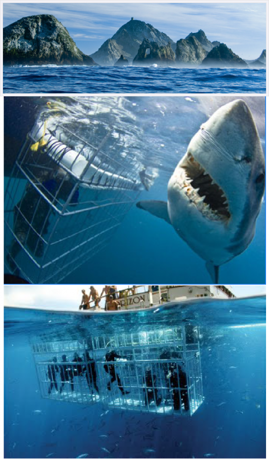 Shark Diving. I Think Bobby Would Be Scared But Id Make
