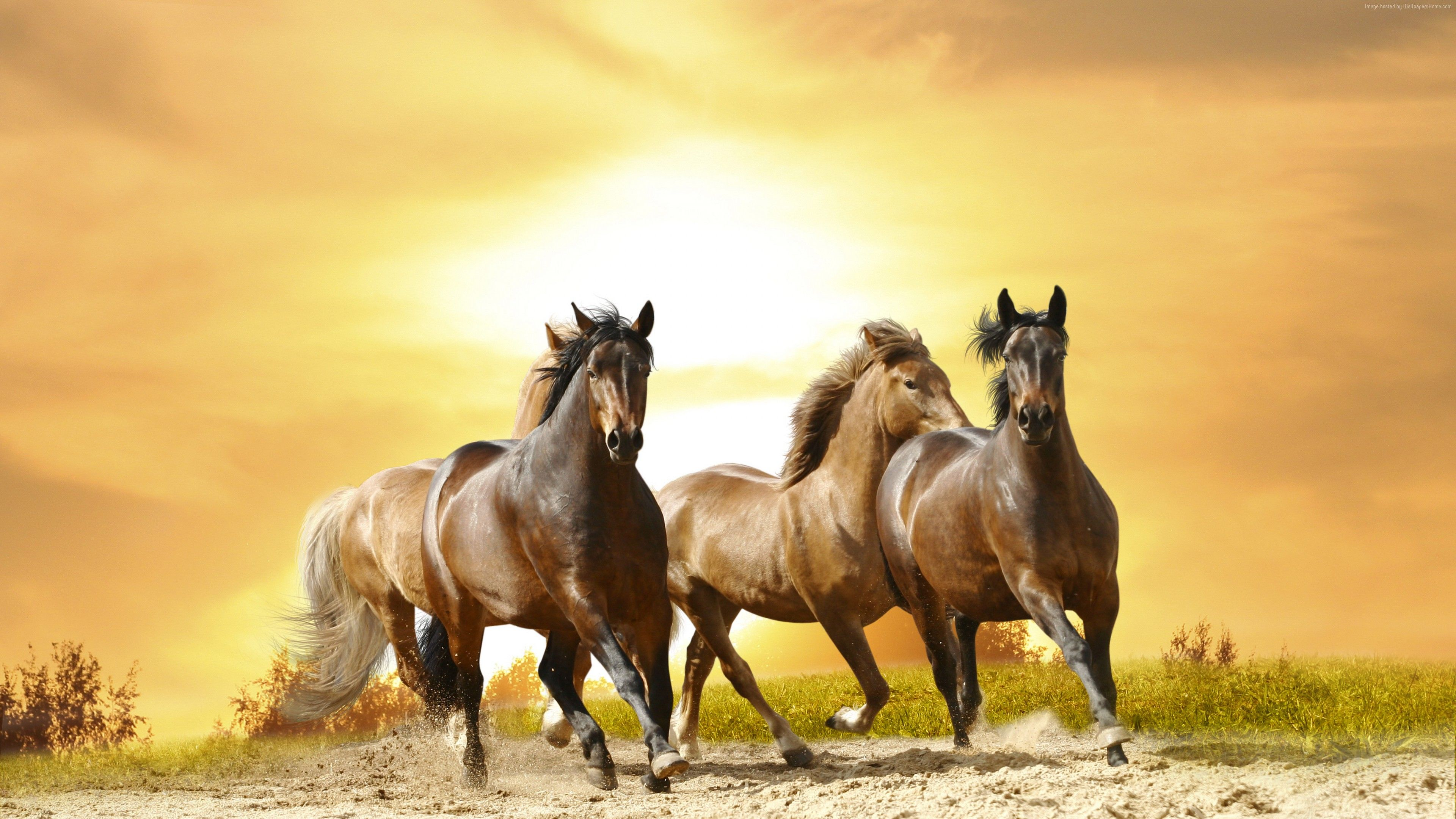 Wallpaper Horses Cute Animals 8k Https Livewallpaperswide Com Animals Wallpaper Horses Cute Animals 8k 9193 8k Cute Animals Horse Wall Art Horse Wall Horses