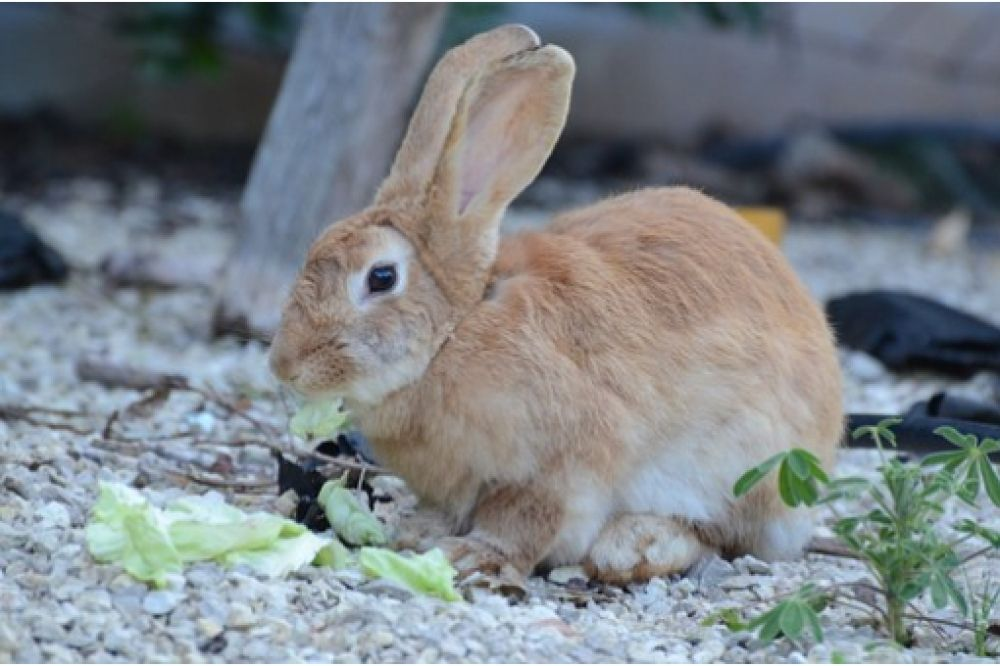 Just look thats outstanding love rabbits visit us by