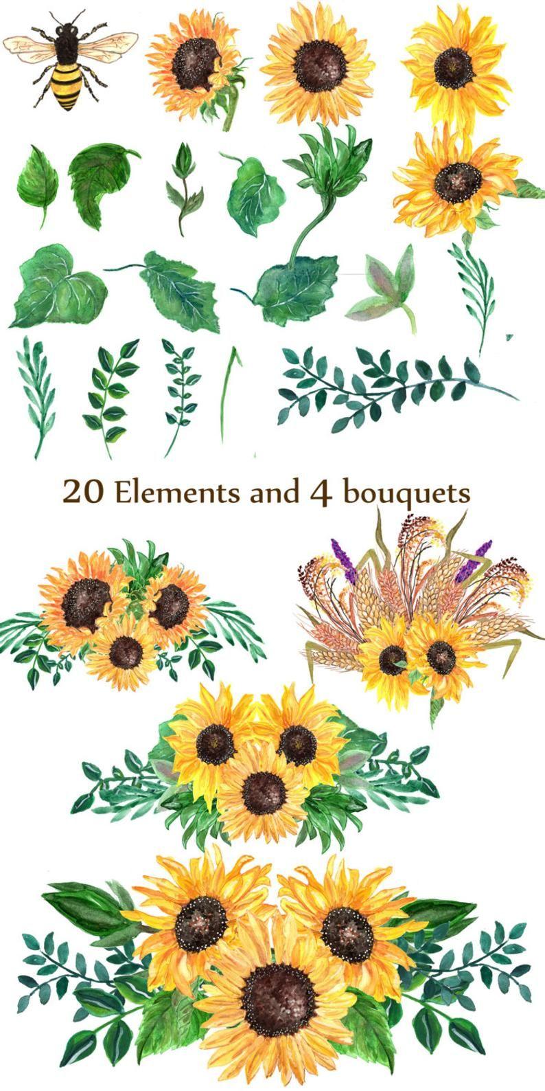 Sunflower watercolor clip art: