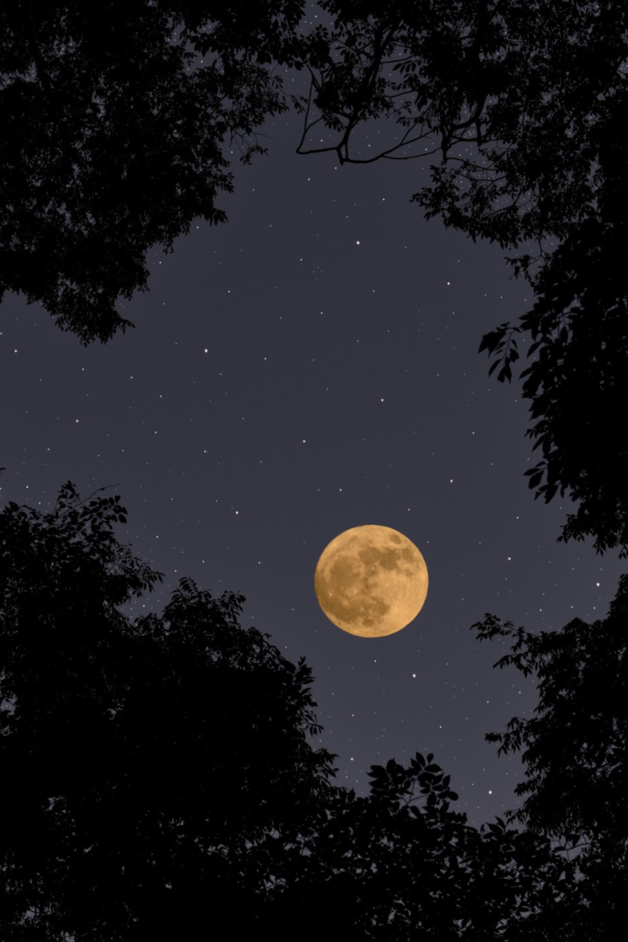 560+Moon Cycle