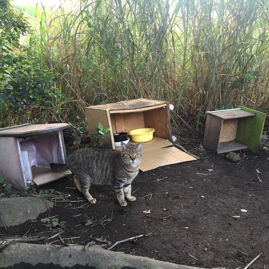 誰かが作ったんだろうな 10個以上猫の巣があった 雨上がりで靴が泥でテンション下がったからホテルのラウンジでコーヒーの気分だったのに17時でラストオーダー Japan Tokyo Kawasaki Tamagawariver Cat 野良猫 Hotel Cafe War In 2020 Cats Animals