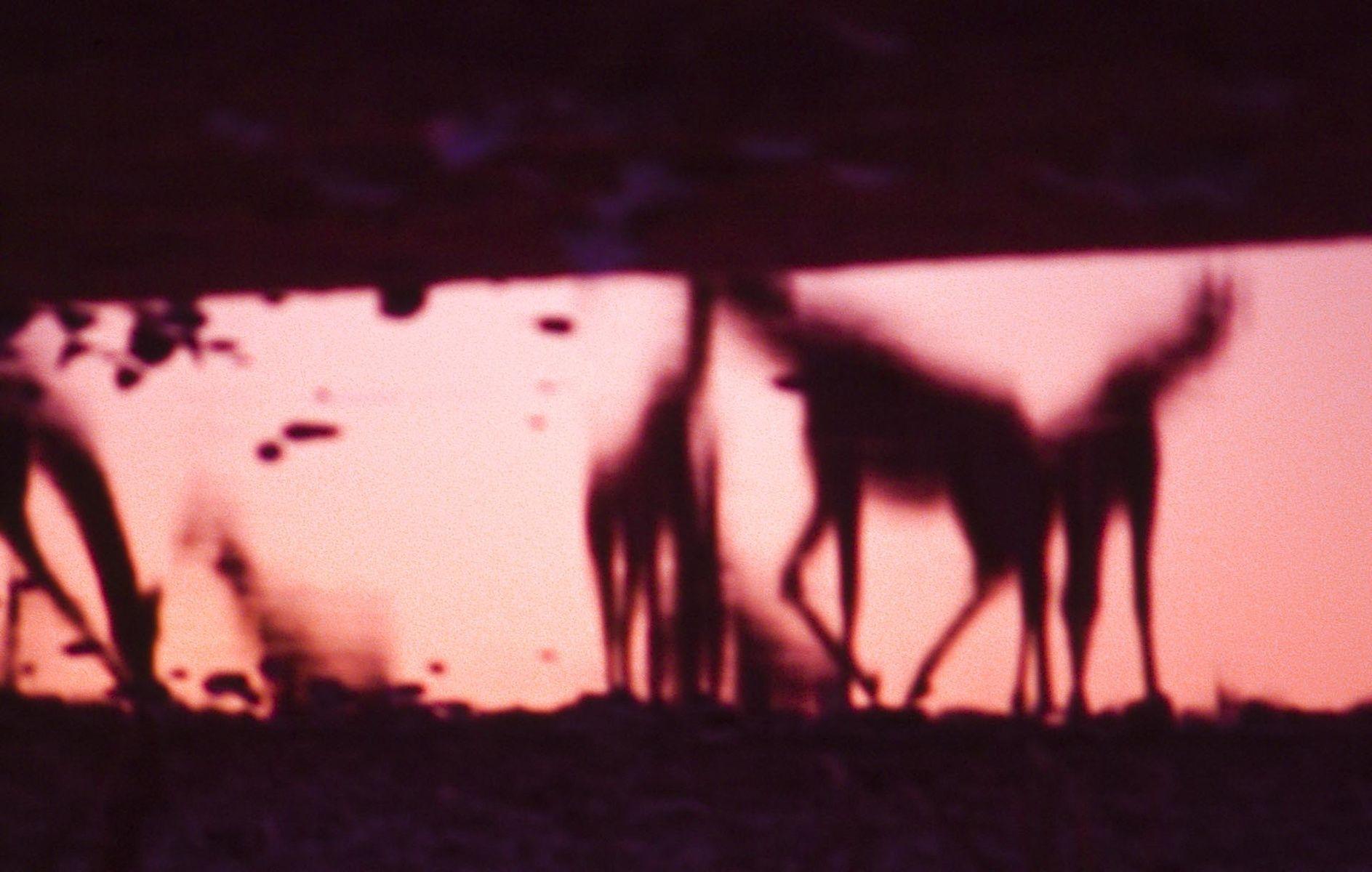 Asca S.R. Aull - Heaven On Earth/Paradis Sur Terre  (Fine Art Photography)  - _Botswana, Namibia