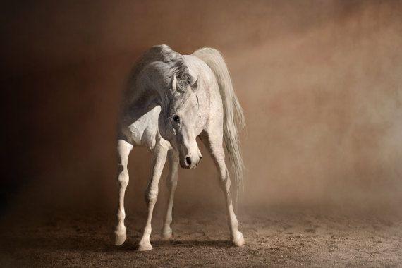 Canvas Print  Arabian 1 by CleverLarkPhoto on Etsy