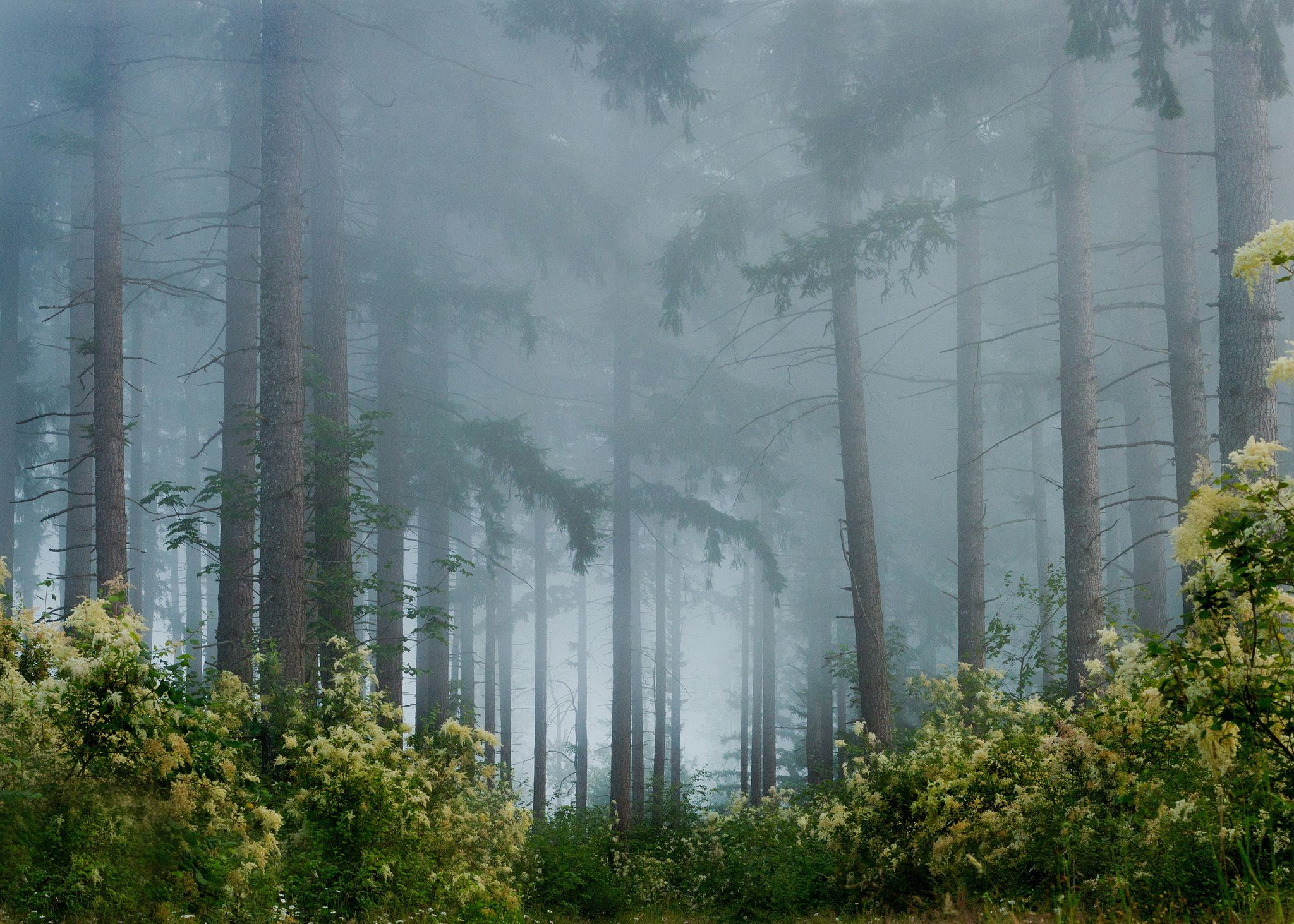 Fog In The Pine Forest Forest Scenery Forest Wallpaper