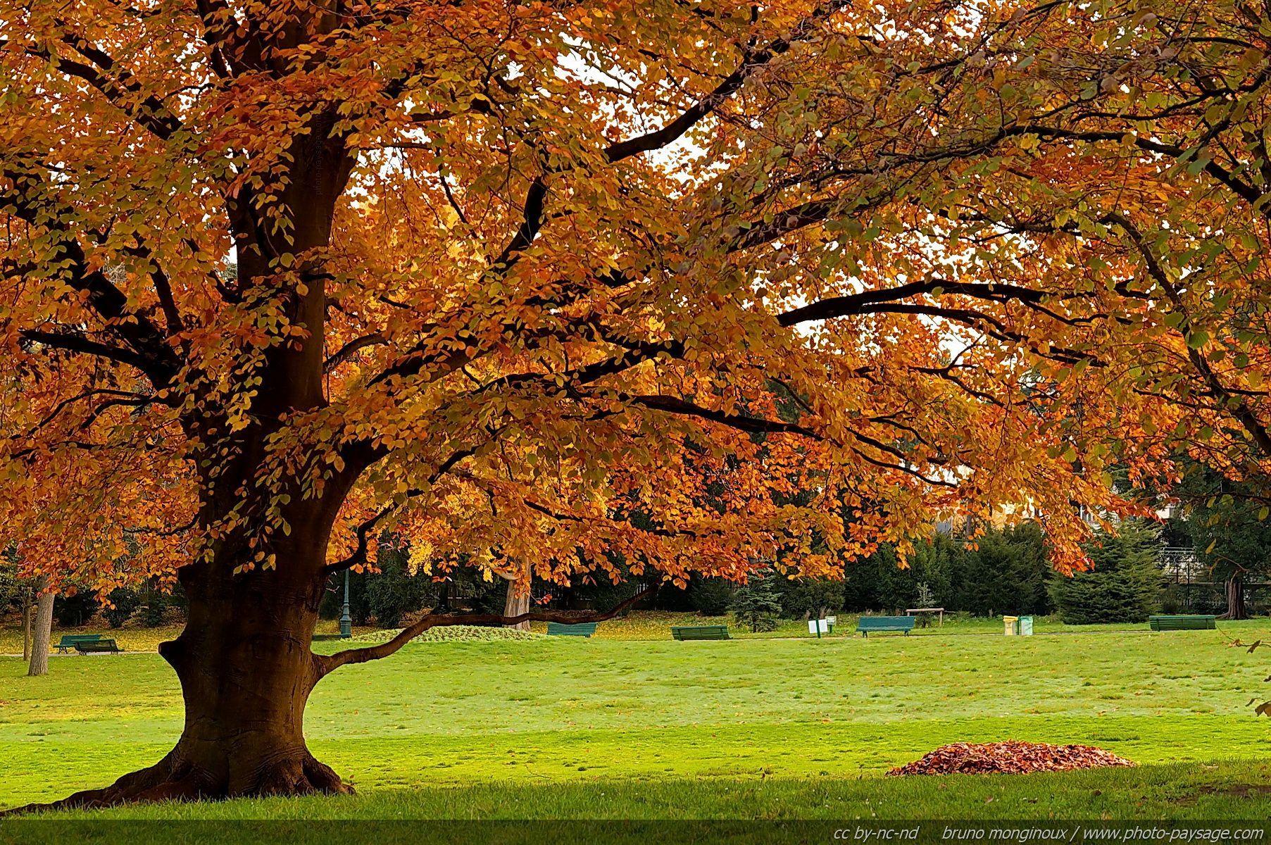 Beautiful Fall Trees Tree During Fall Season Fall Colors In