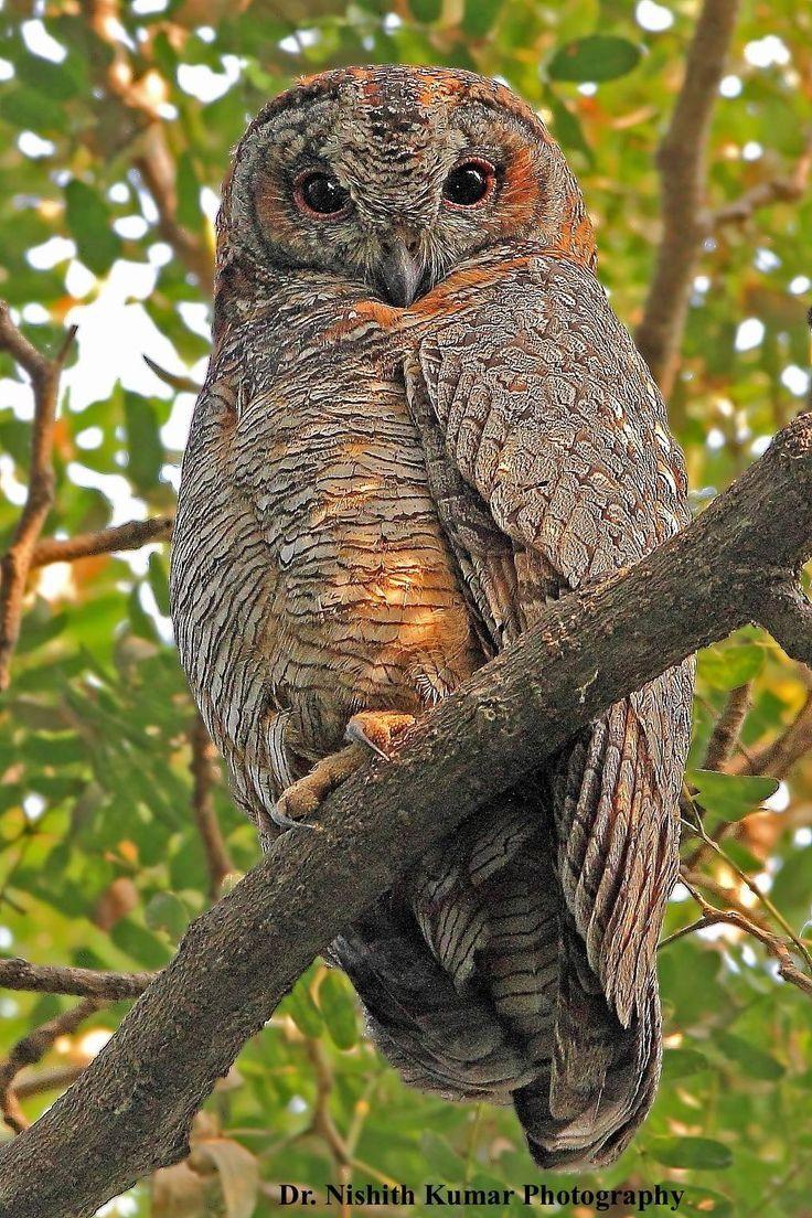 ภเгคк ค๓๏ สัตว์, รูปสัตว์น่ารัก, นกฮูก