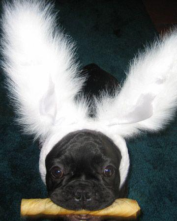 I'm a bunny rabbit...