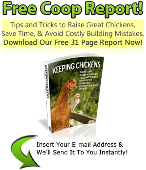 Chicken Coop Plans: 24 Tips to Build the Perfect DIY Coop!