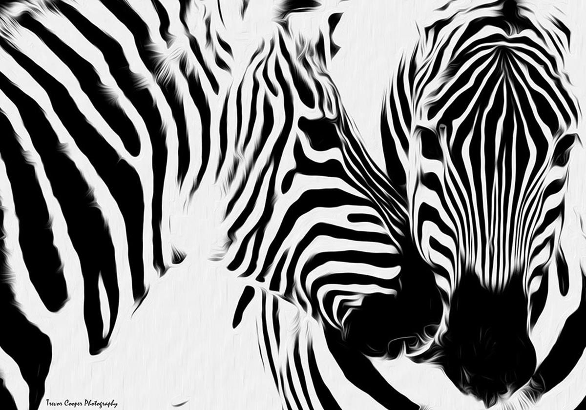 1000 Images About Zebras On Pinterest Zebra Painting Stippling Zebra Painting Whimsical Art Paintings Monochromatic Drawing