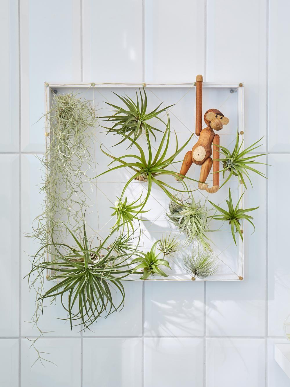 Kreativ-Idee: Hängender Tillandsien-Garten in 18  Kreativ