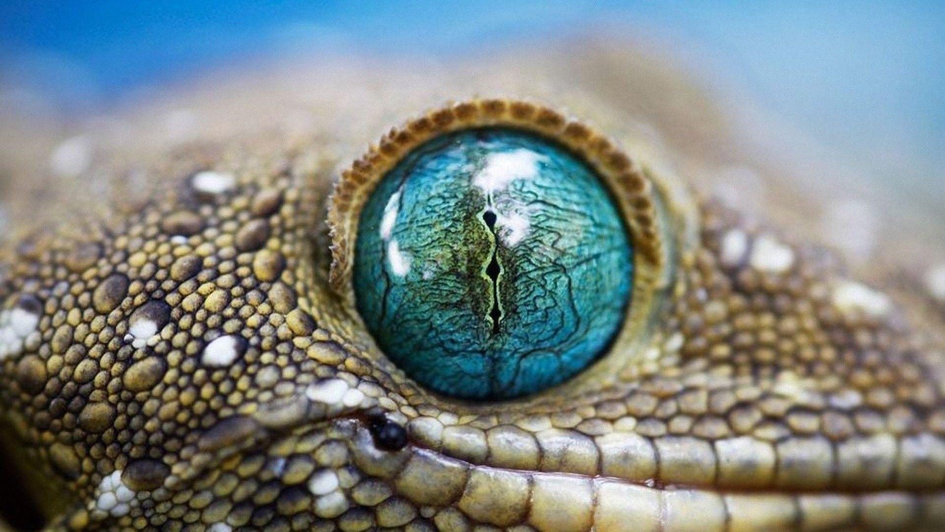 Crazy Macro photography of eyes