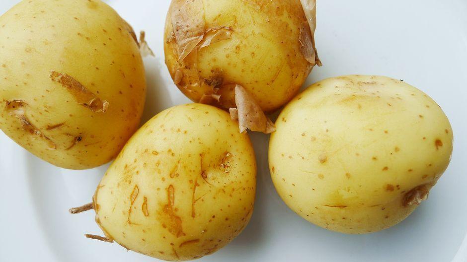 Useissa Euroopan maissa suositellaan, että peruna pitäisi aina kuoria, koska peruna kehittää kuorikerrokseen terveydelle haitallisia aineita. Suomessa taas varhaisperunan syöntiä kuorineen suorastaan himoitaan. Mikä tekee suomalaisista perunankuorista muita syötävämpiä?