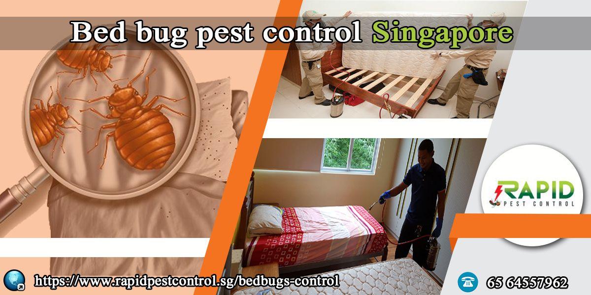 Bed bug pest control singapore rapid pest control bed