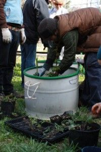 Barrels Frukttraer