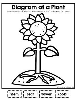 Plant Diagram by The Kindergarten Creator | Teachers Pay ...