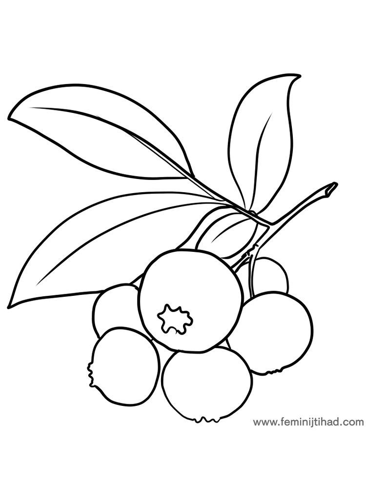 Bilberry Coloring Page Pdf With Images Fruit Coloring Pages