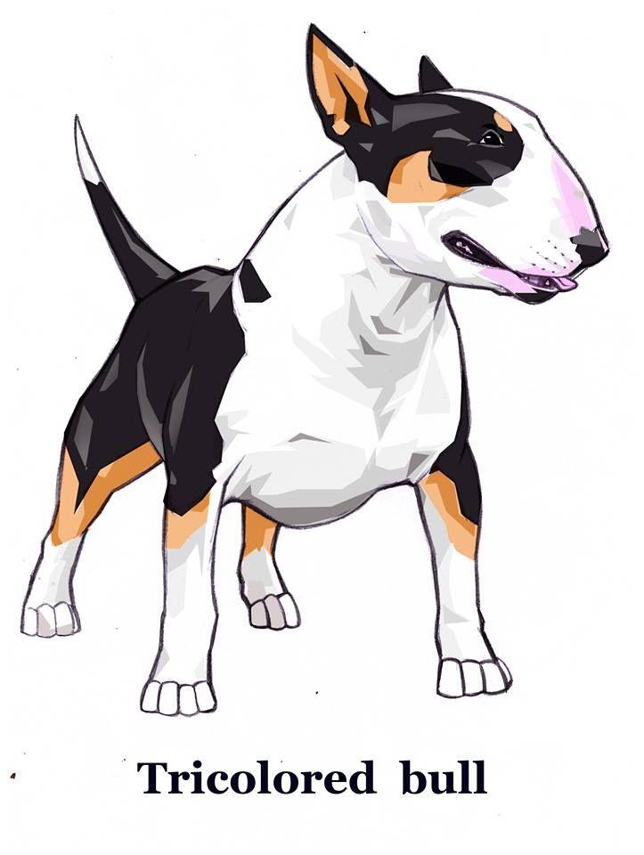 Pin De Marc Schneider En Naxterrier Bull Terrier Terrier Perros