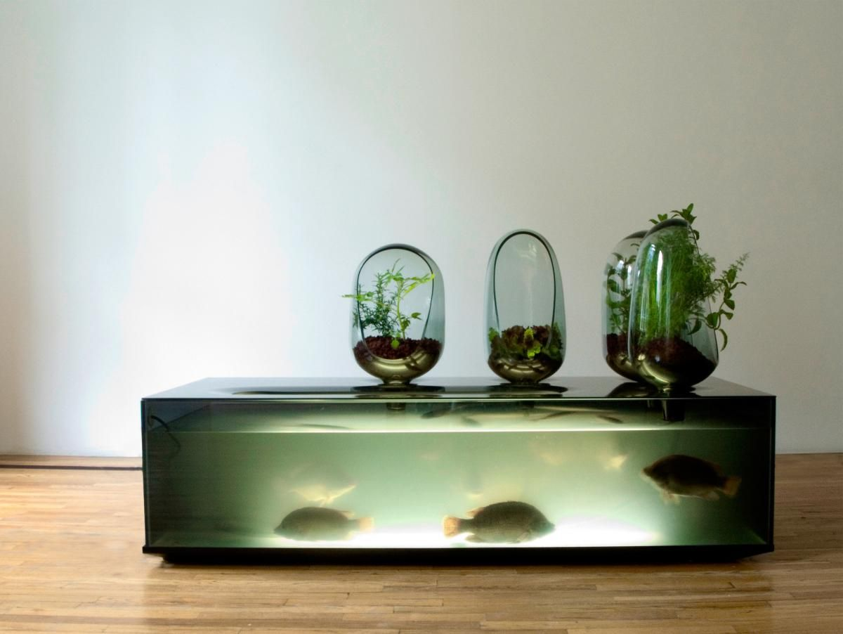 best 25+ home aquarium ideas on pinterest | amazing fish tanks