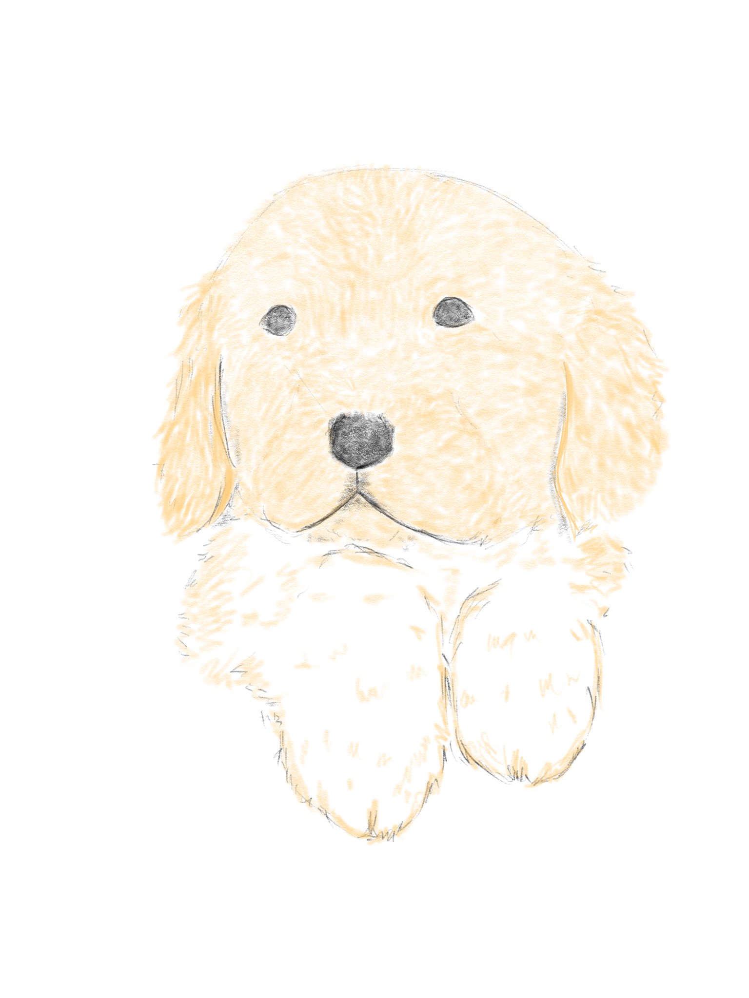 Pin By Johnson Wen On Dog Sketch Dog Sketch Sketches Teddy Bear
