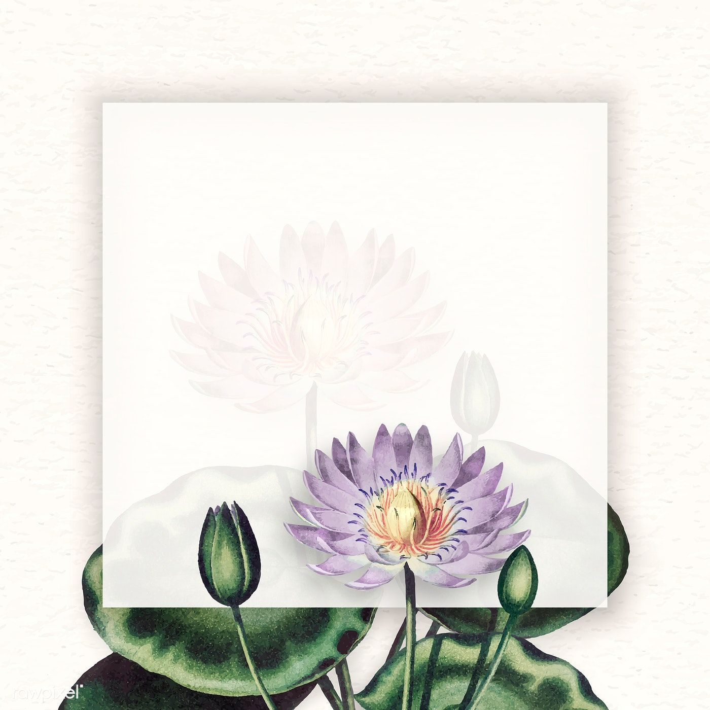 Blank purple water lilies frame vector free image by