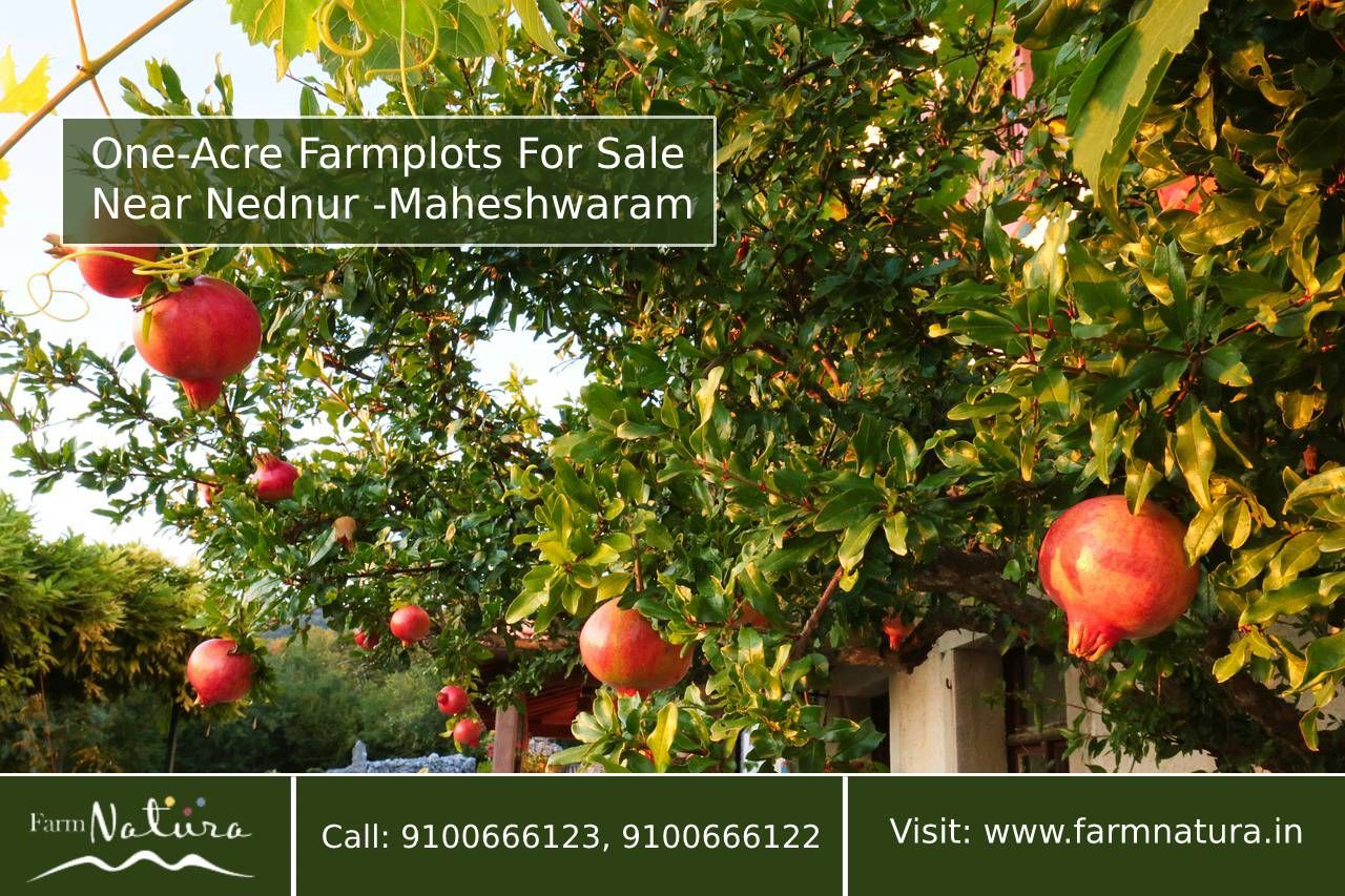 Farm Natura was offering oneacre farmplots for sale near