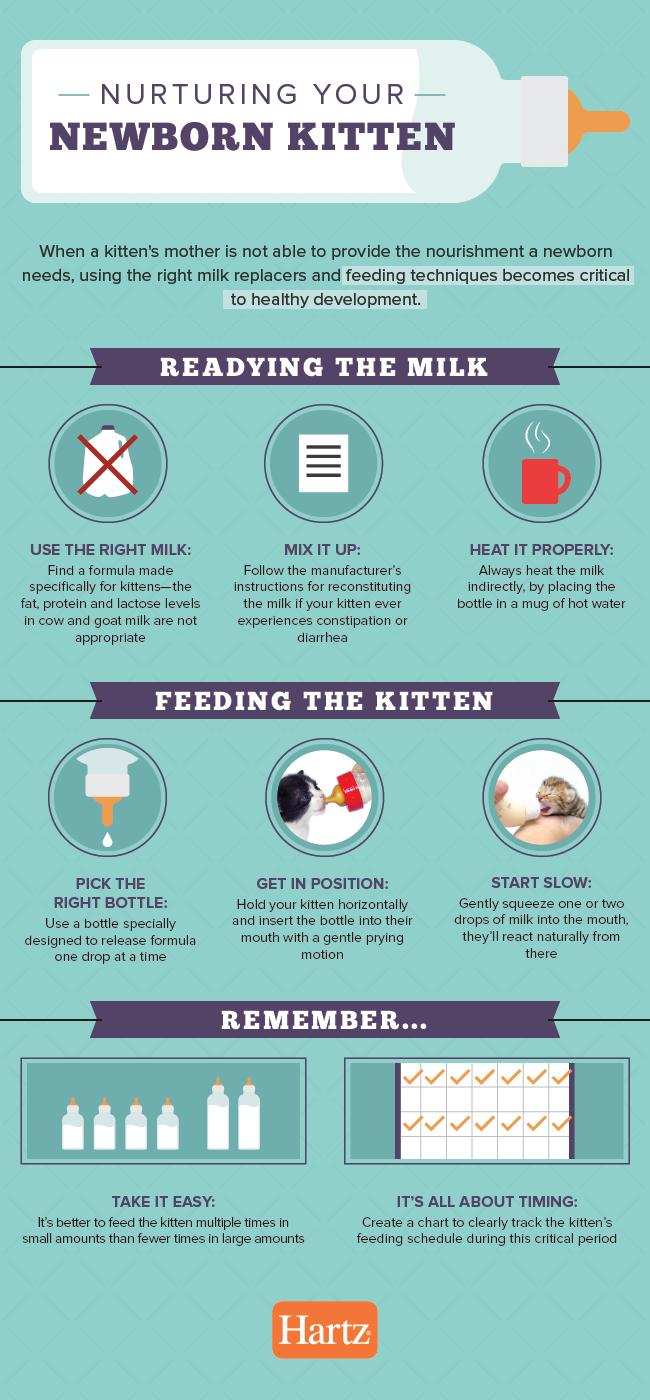 Nurturing Your Newborn Kitten Kitten Care Newborn Newborn Kittens Happy Animals