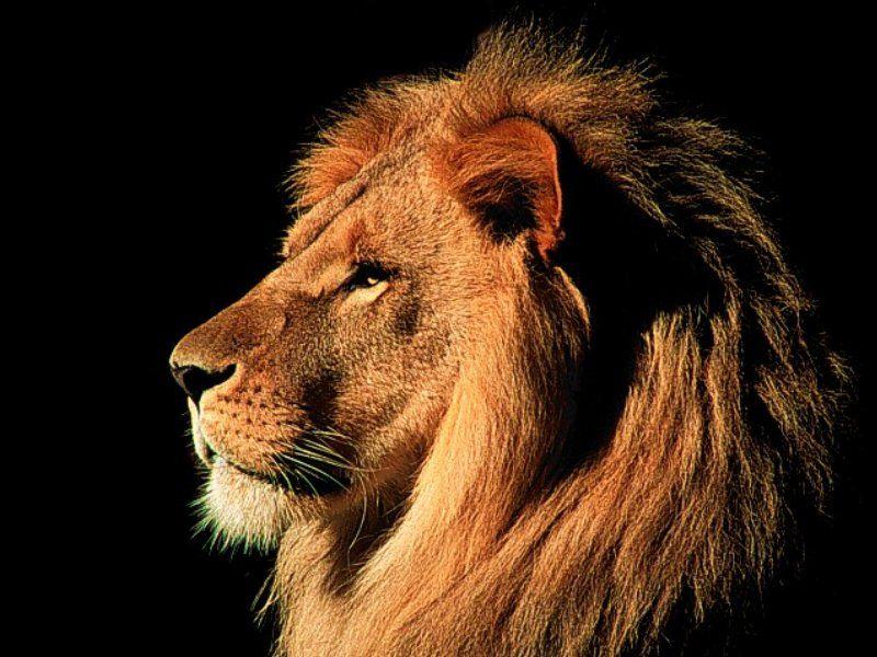 My Man Aslan