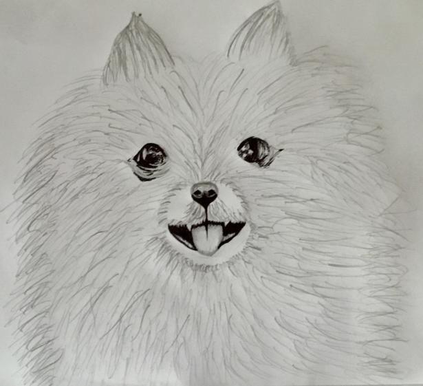Картинки собак для срисовки шпиц